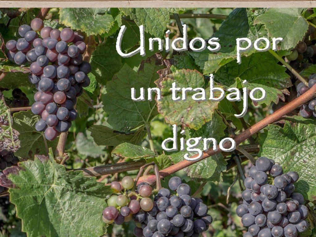 Cáritas Ciudad Real reclama condiciones de trabajo dignas para los temporeros agrícolas